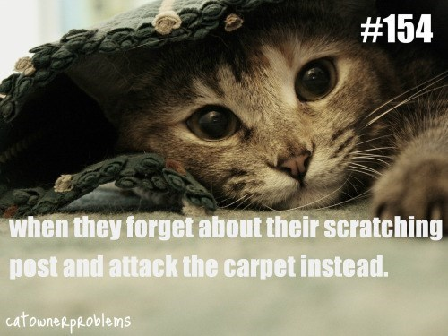 cat underneath a rug when they forget about their scratching post and attack the carpet instead