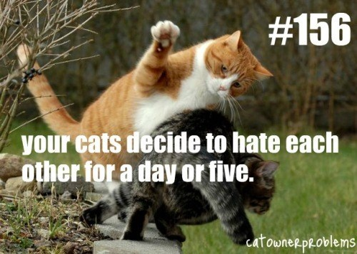 ginger and a tabby cat fighting each other outside your cats decide to hate each other for a day or five