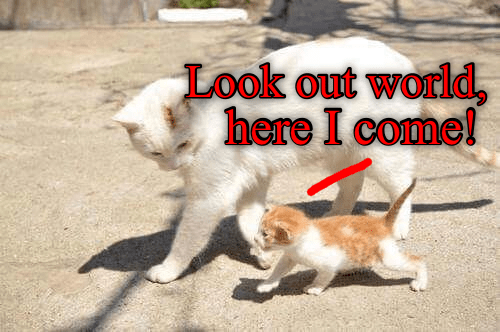funny cats walking together