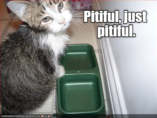 funny cat looking upset because its food bowls are empty