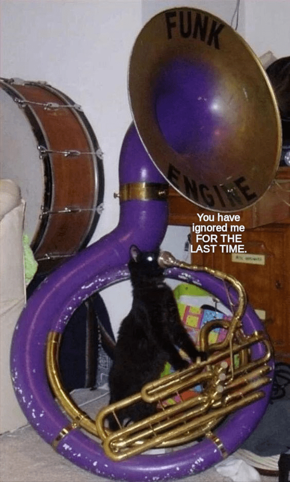 funny cat playing an instrument