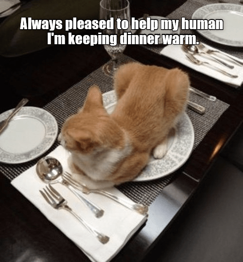 funny cat sitting on a plate on a set dinner table