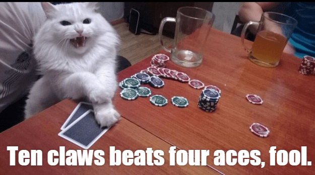 funny cat playing poker