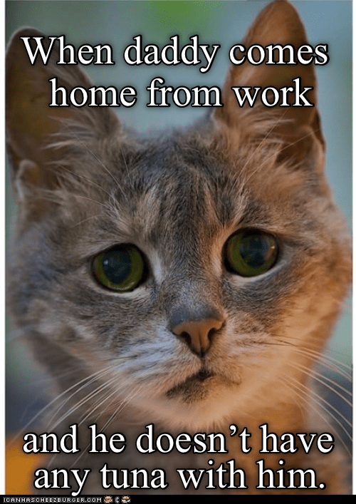 funny cat upset that its owner didn't bring tuna home