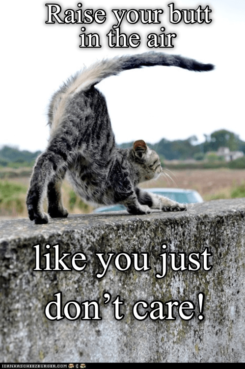 funny cat raising its butt in the air while standing on a ledge