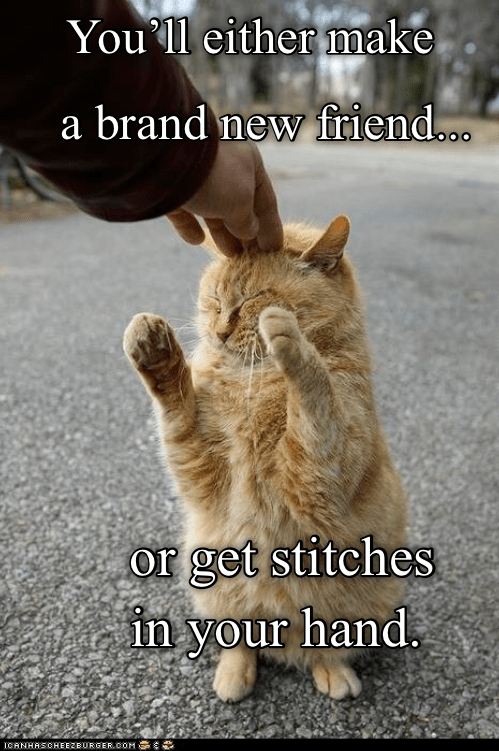 funny cat standing in a road and getting pet by a human