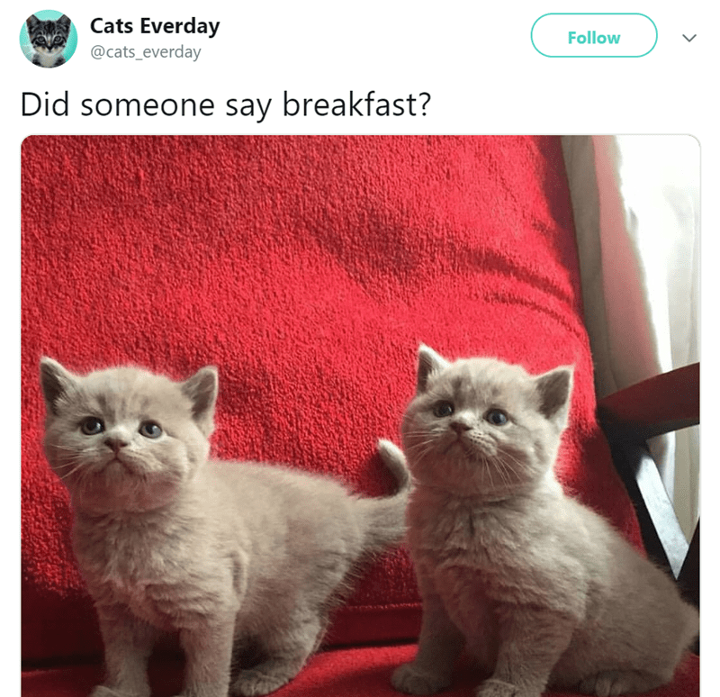 Cat - Cats Everday @cats_everday Follow Did someone say breakfast? >