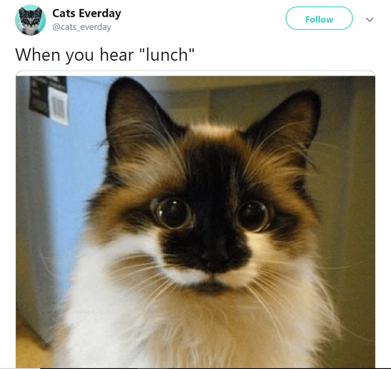 "Cat - Cats Everday @cats_everday Follow When you hear ""lunch"""