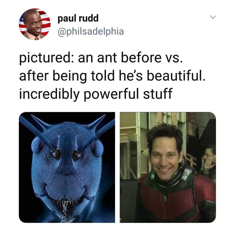 Text - paul rudd @philsadelphia pictured: an ant before vs. after being told he's beautiful. incredibly powerful stuff