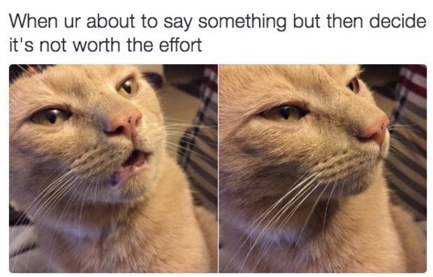 Cat - When ur about to say something but then decide it's not worth the effort