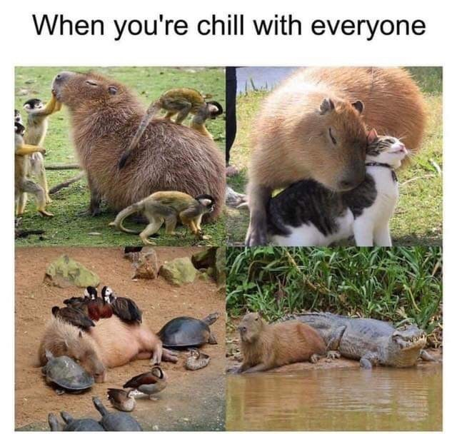 Wildlife - When you're chill with everyone