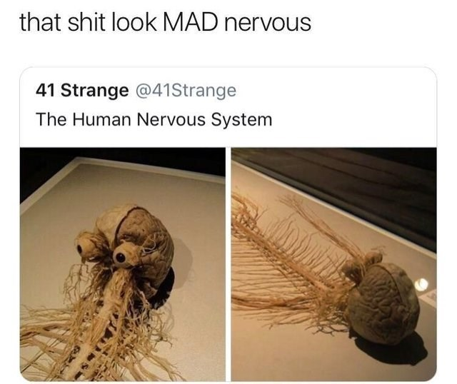 literal joke - Organism - that shit look MAD nervous Strange @41Strange The Human Nervous System