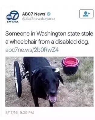 Product - ABC7 News eabe7newsbayarea obc BAY AREA Someone in Washington state stole a wheelchair froma disabled dog. abc7ne.ws/2b0Rwz4 8/17/16, 9:29 PM