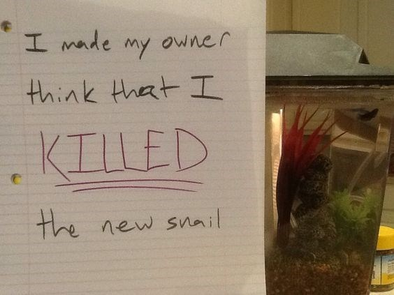 Text - I made owner My think that I KILLED the new snail