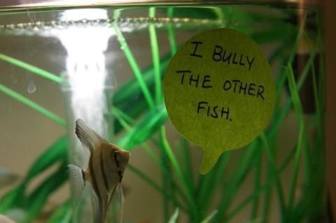 Green - I BULLY THE OTHER FISH