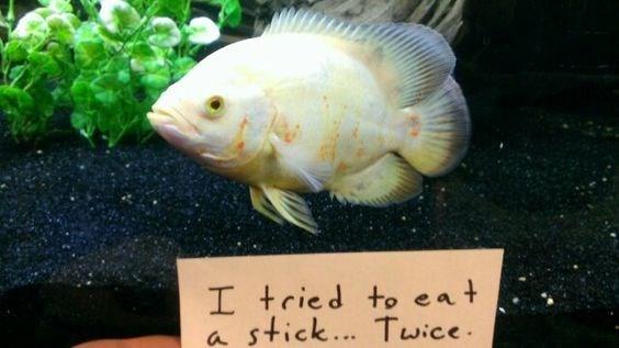 Fish - I tried to eat stick... Twice a