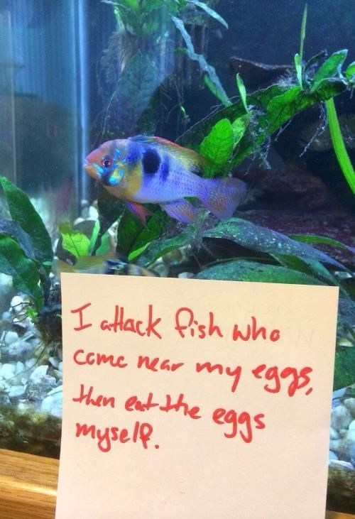 Fish - I afack Qish whe my eggs eggs Ccme near ten ent the mysele
