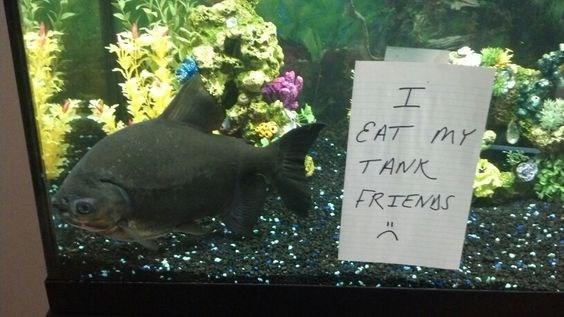 Fish - I EAT MY TANK FRTENIS