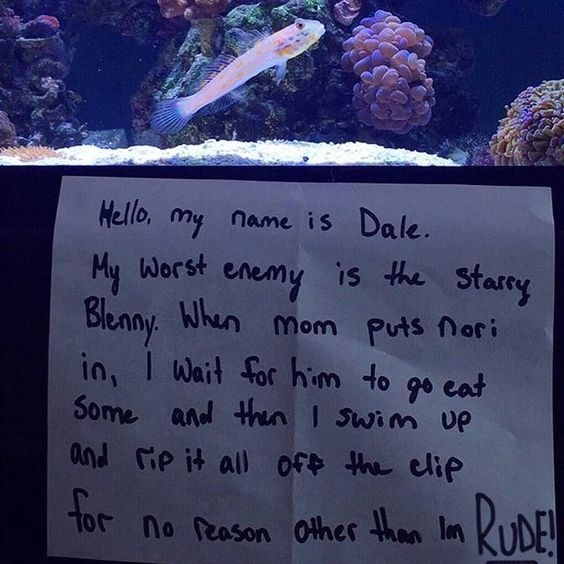 Natural environment - Hello, my name is Dale is the Starry My Worst en enemy Bleany When in, I Mom Puts nori Wait for him to go eat 90 Some and thn I Swim UP and ie it all of the elip tor no Reason other han In DE