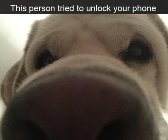 Dog breed - This person tried to unlock your phone