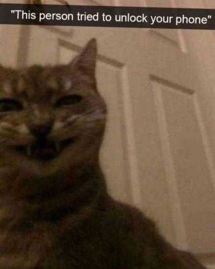 """Cat - """"This person tried to unlock your phone"""""""