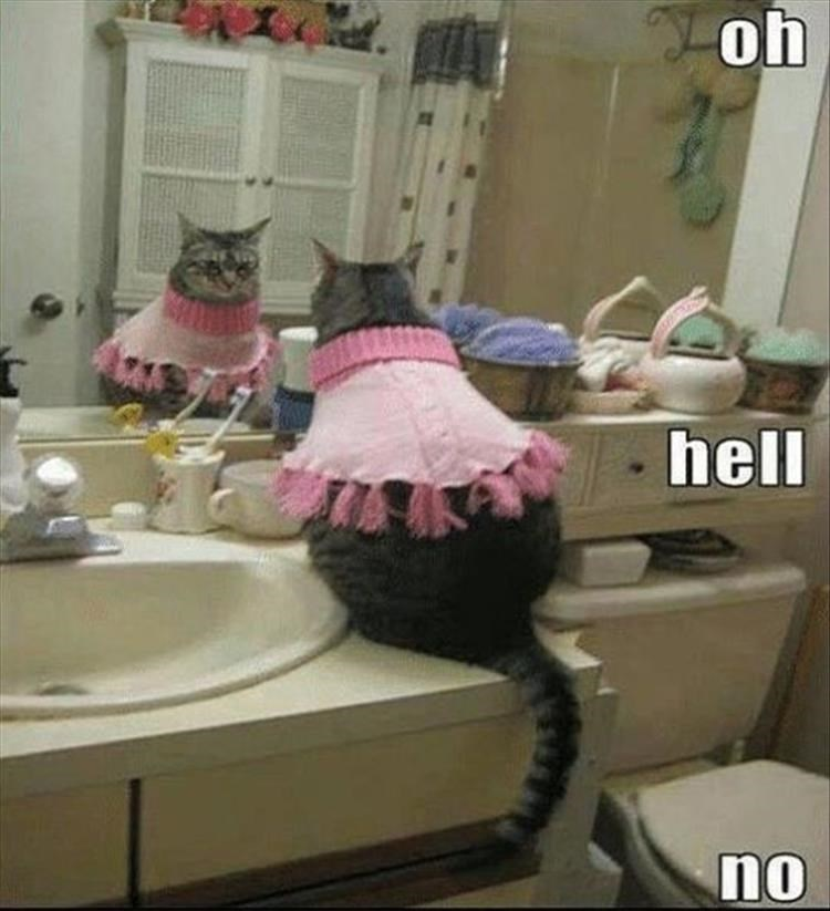 caturday - Room - oh hell no
