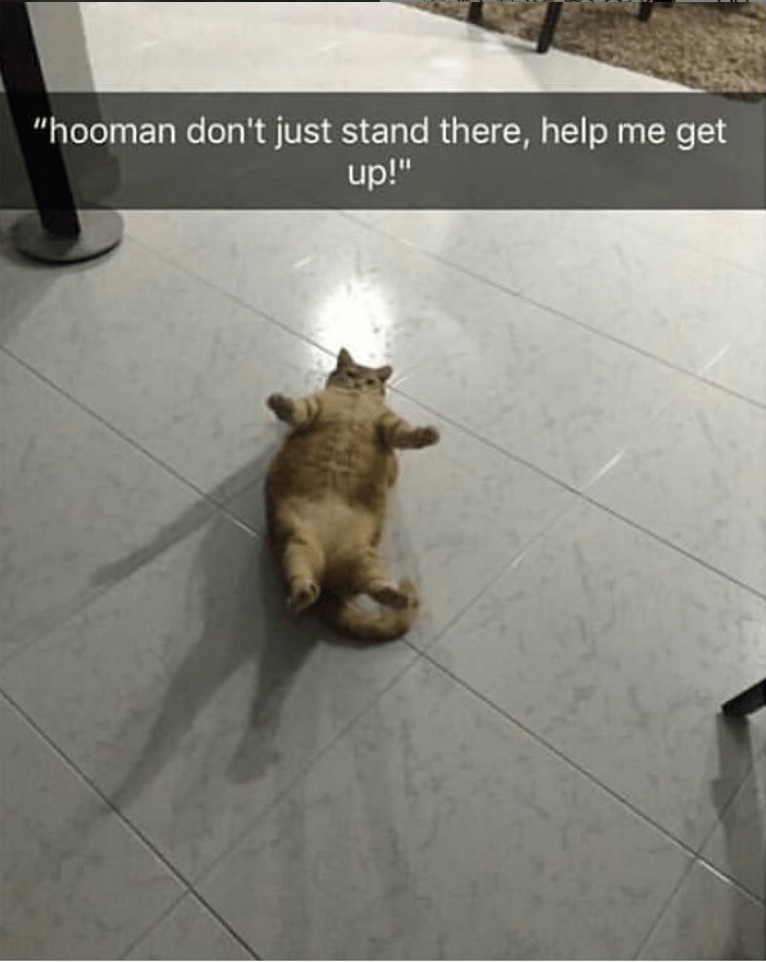 """caturday - Dog - """"hooman don't just stand there, help me get up!"""""""