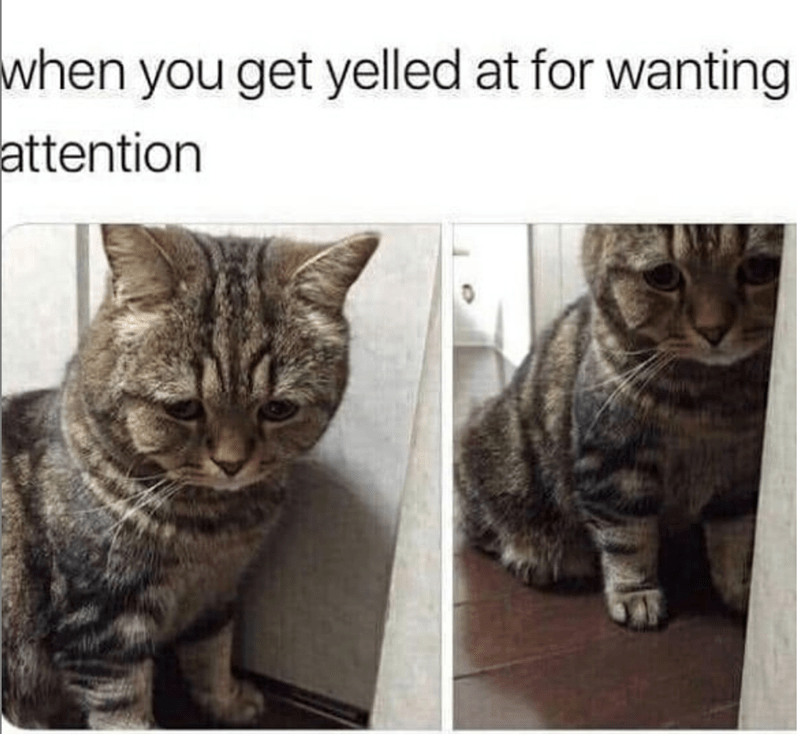 caturday - Cat - when you get yelled at for wanting attention
