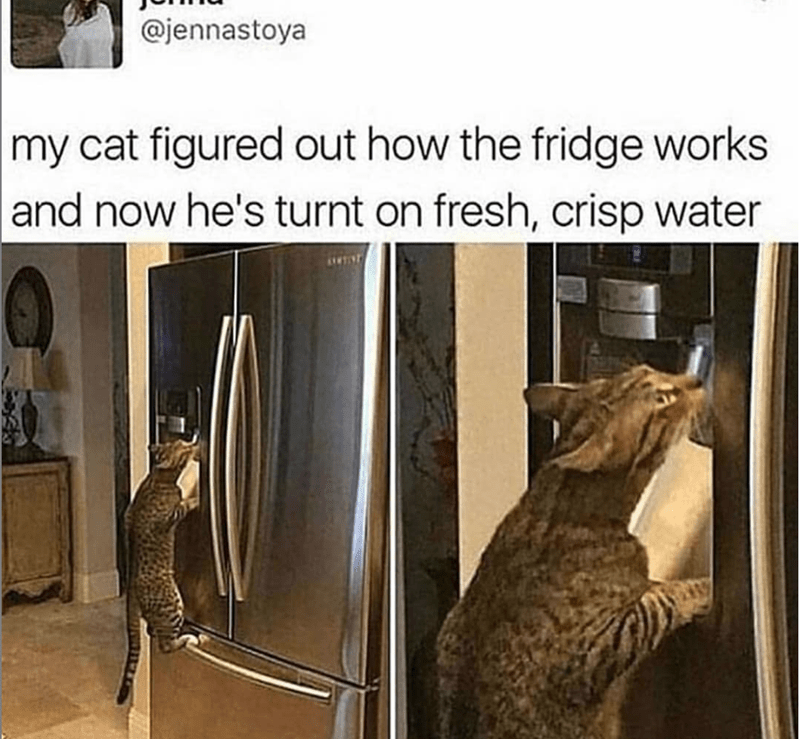 caturday - Cat - @jennastoya |my cat figured out how the fridge works and now he's turnt on fresh, crisp water NTIN