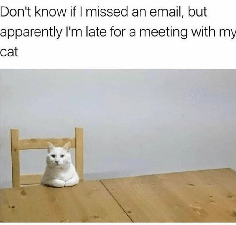 caturday - Text - Don't know if I missed an email, but apparently I'm late for a meeting with my cat