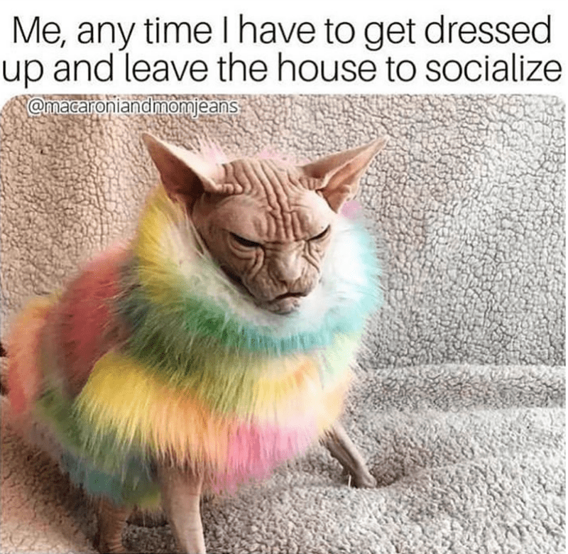 caturday - Cat - Me, any time I have to get dressed up and leave the house to socialize Omacaroniandmonjeans