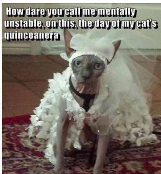 caturday - Dog - How dare vou call me mentally unstable,on this,he day ofrmy cat's quinceanera