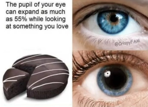 Eyebrow - The pupil of your eye can expand as much as 55% while looking at something you love eCrispyFAM