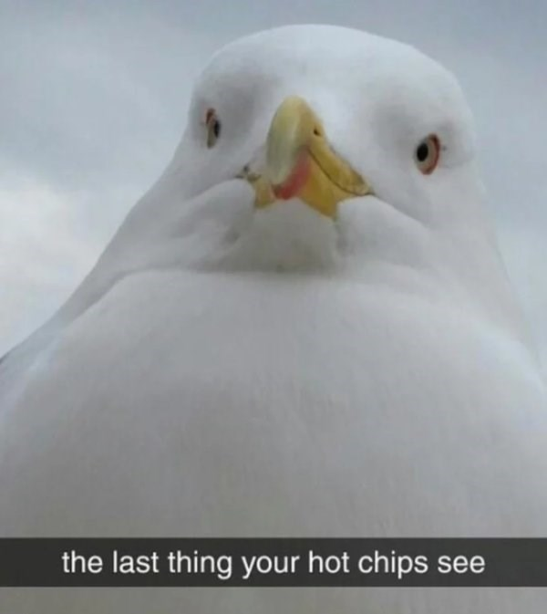 Beak - the last thing your hot chips see