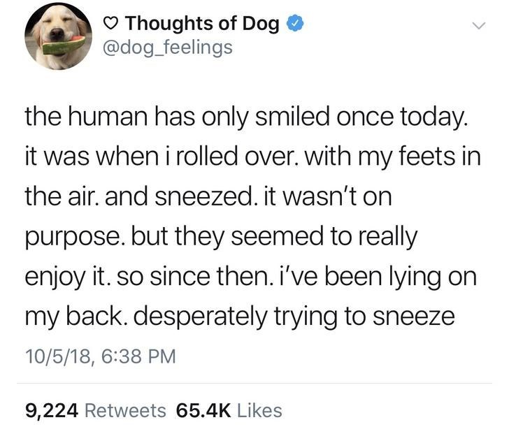 Text - Thoughts of Dog @dog_feelings the human has only smiled once today. it was when i rolled over. with my feets in the air. and sneezed. it wasn't on purpose. but they seemed to really enjoy it. so since then. i've been lying on my back. desperately trying to sneeze 10/5/18, 6:38 PM 9,224 Retweets 65.4K Likes