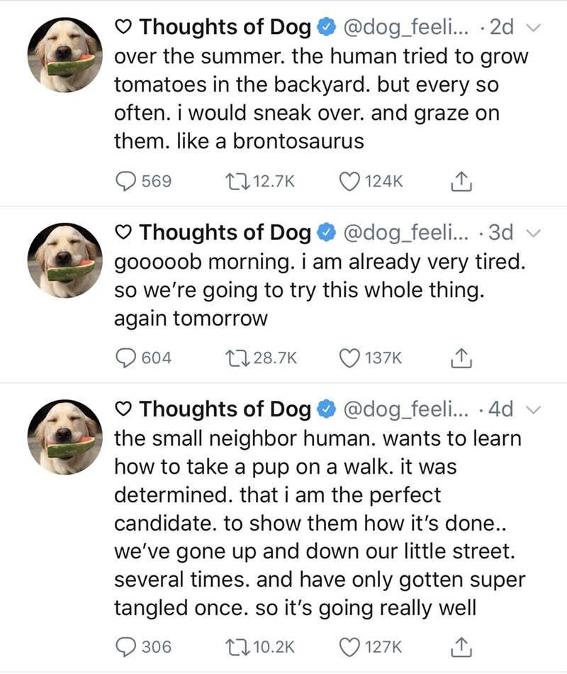 Text - Thoughts of Dog over the summer. the human tried to grow tomatoes in the backyard. but every so often. i would sneak over. and graze on @dog_feeli... 2d them. like a brontosaurus 112.7K 124K 569 Thoughts of Dog gooooob morning. i am already very tired. so we're going to try this whole thing. again tomorrow @dog_feeli... .3d L128.7K 604 137K Thoughts of Dog the small neighbor human. wants to learn how to take a pup on a walk. it was determined. that i am the perfect @dog_feeli... .4d candi