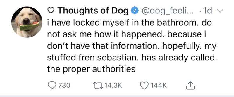 Text - Thoughts of Dog i have locked myself in the bathroom. do not ask me how it happened. because i don't have that information. hopefully. my stuffed fren sebastian. has already called. the proper authorities @dog_feeli... .1d 730 t14.3K 144K