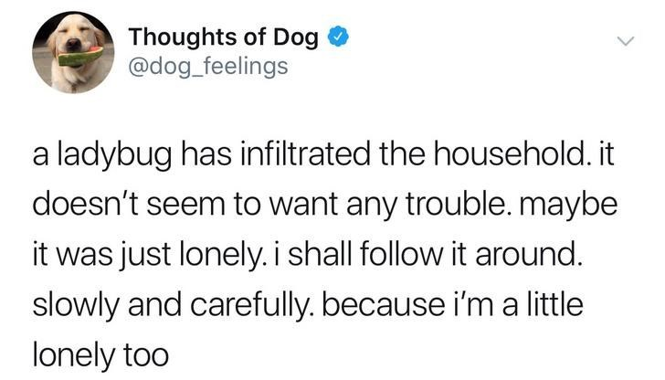 Text - Thoughts of Dog @dog_feelings a ladybug has infiltrated the household. it doesn't seem to want any trouble. maybe it was just lonely. i shall follow it around. slowly and carefully. because i'm a little lonely too
