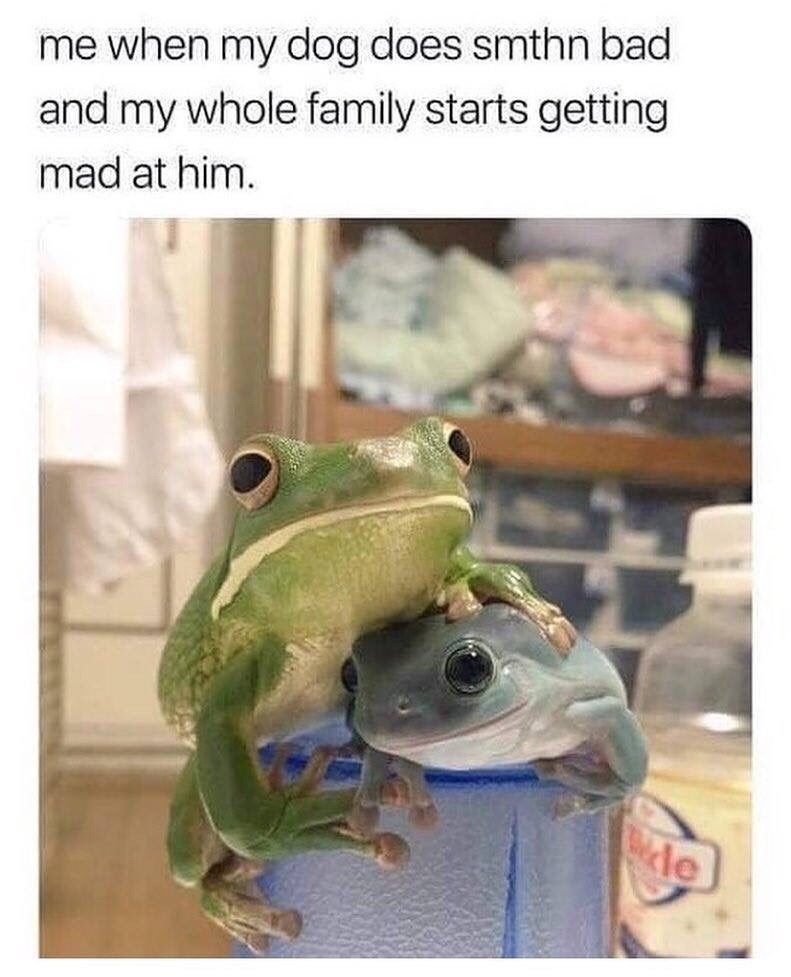 pointless meme of a frog protecting another frog and when your family gets mad at your dog