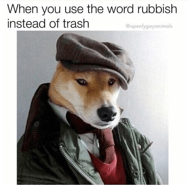 Dog - When you use the word rubbish instead of trash @openlygayanimals