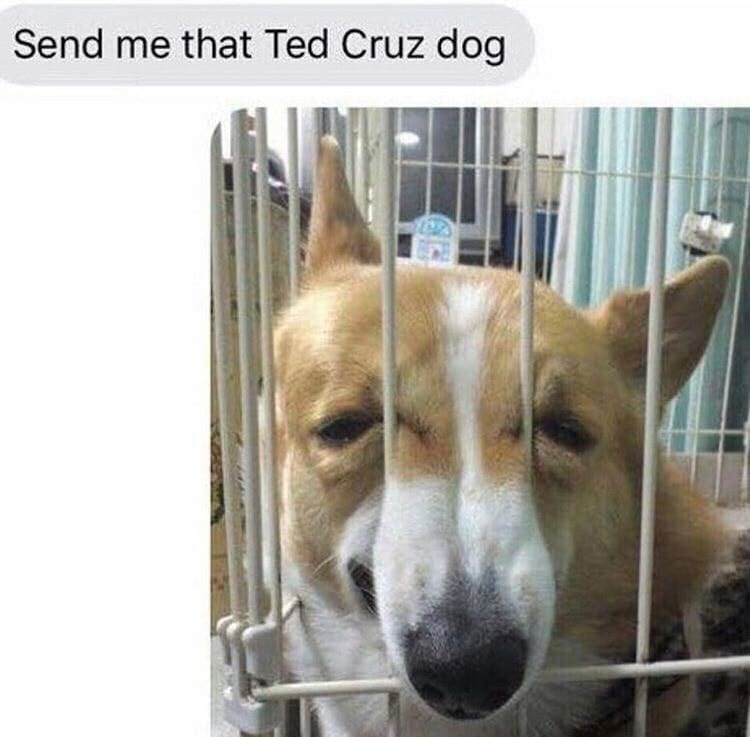 "Text message that reads, ""Send me that Ted Cruz dog"" above a pic of a dog with a squished face that looks like Ted Cruz"