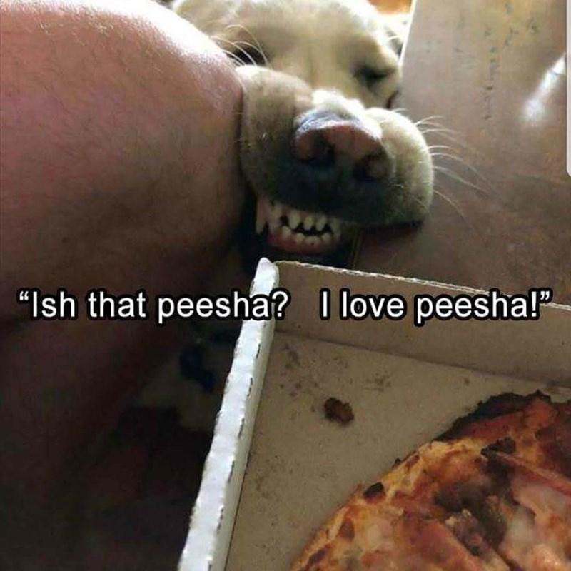 "Snout - ""Ish that peesha? love peesha!"""