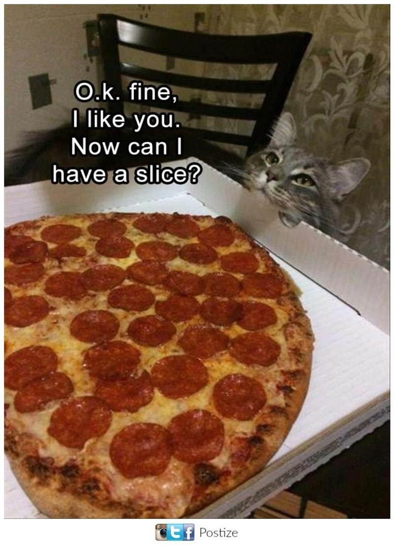 Pepperoni - O.k. fine, I like you. Now can l have a slice? tf Postize