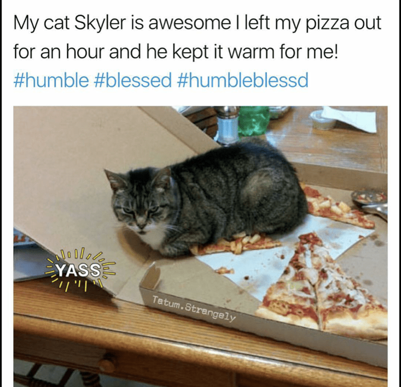 Cat - My cat Skyler is awesome I left my pizza out for an hour and he kept it warm for me! #humble #blessed #humbleblessd YASS ן Ziןי Tetum.Strangely