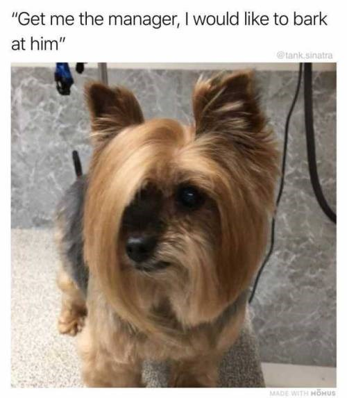 """Dog - """"Get me the manager, I would like to bark at him"""" tank.sinatra MADE WITH HOHUS"""