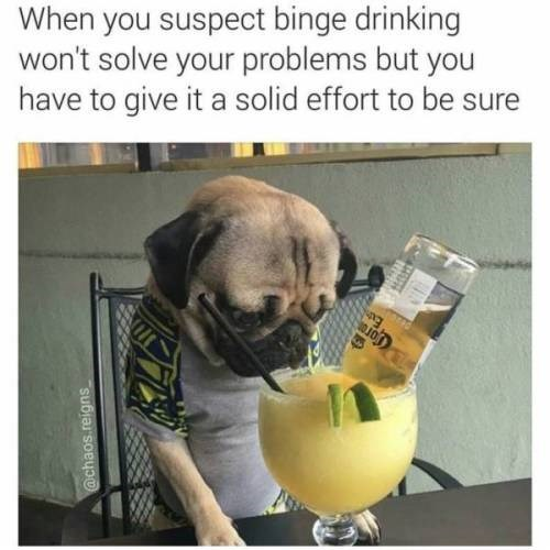 Pug - When you suspect binge drinking won't solve your problems but you have to give it a solid effort to be sure @chaos.reigns