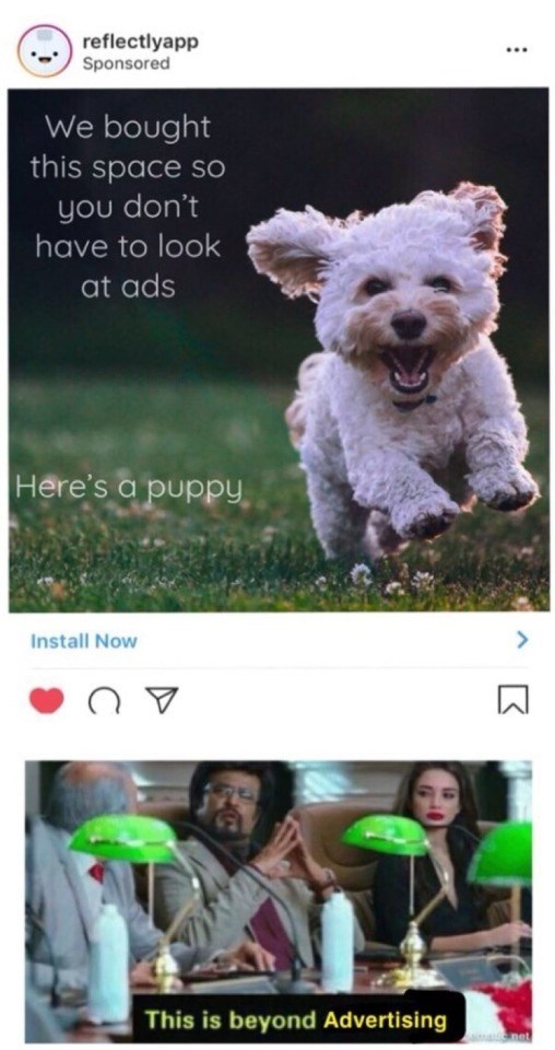 Dog - reflectlyapp Sponsored We bought this space sO you don't have to look at ads Here's a puppy Install Now This is beyond Advertising net