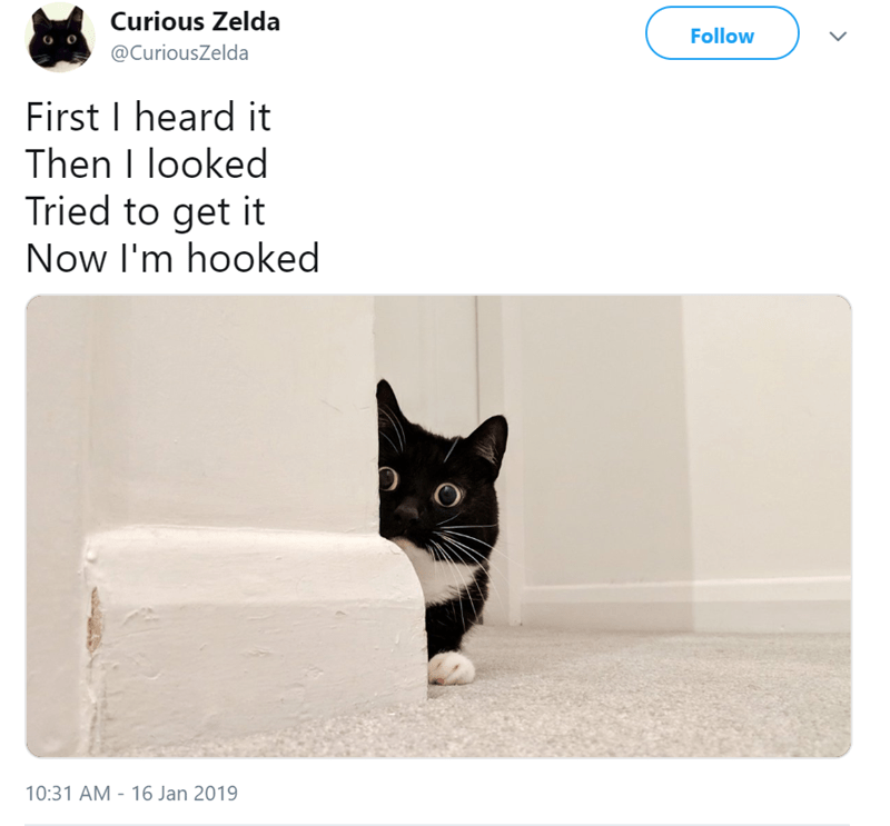 Cat - Curious Zelda Follow @CuriousZelda First I heard it Then I looked Tried to get it Now I'm hooked 10:31 AM 16 Jan 2019