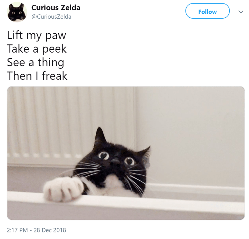 Cat - Curious Zelda Follow @CuriousZelda Lift my paw Take a peek See a thing Then I freak 2:17 PM 28 Dec 2018