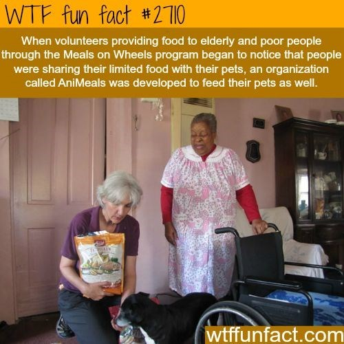 wholesome meme - Product - WTF fun fact #2710 When volunteers providing food to elderly and poor people through the Meals on Wheels program began to notice that people were sharing their limited food with their pets, an organization called AniMeals was developed to feed their pets as well. wtffunfact.com